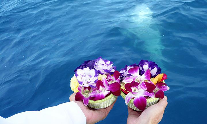 海洋葬の合同プランと料金