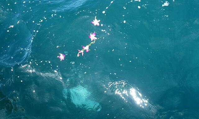 和歌山での海洋散骨の献花