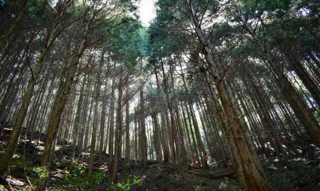 散骨の種類と山林