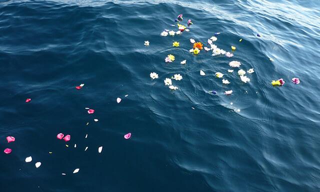 湘南での散骨の水面の花