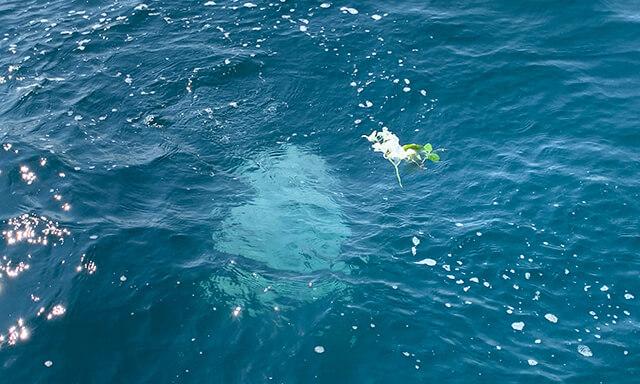 南紀白浜での海洋散骨業者